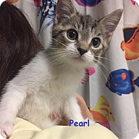 Adopt A Pet :: PEARL - Cliffside Park, NJ