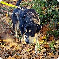 Adopt A Pet :: Rollo - MA - Warren, ME
