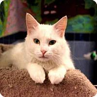 Adopt A Pet :: SNOWBALL - Wainscott, NY