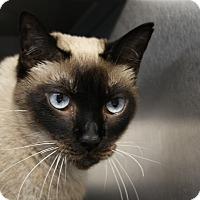 Adopt A Pet :: Chylde - Sarasota, FL