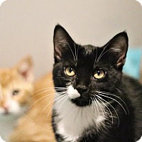Adopt A Pet :: Pudgy - Lincoln, NE