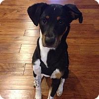 Adopt A Pet :: Ranger - Monroe, NC