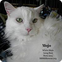 Adopt A Pet :: Mojo - Temecula, CA