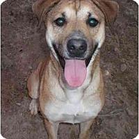 Adopt A Pet :: Burlesque - Floresville, TX