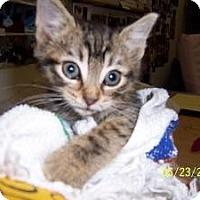Adopt A Pet :: Toby, Mimi, Riley - Island Park, NY