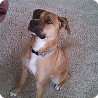 Adopt A Pet :: Kyra - Gig Harbor, WA