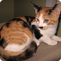 Adopt A Pet :: Emily - Colmar, PA