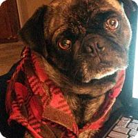 Adopt A Pet :: Tanner - Playa Del Rey, CA