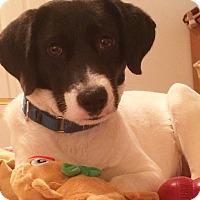Adopt A Pet :: Lexus - Richmond, VA