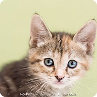 Adopt A Pet :: Wish - Fountain Hills, AZ