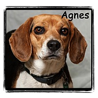 Adopt A Pet :: Agnes - Warren, PA