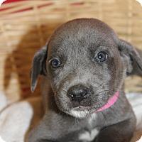 Adopt A Pet :: Sandy - Waldorf, MD