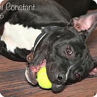 Adopt A Pet :: Malachi - Troy, MI