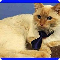 Adopt A Pet :: BINKI - Canfield, OH