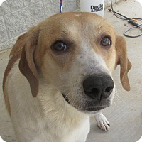 Adopt A Pet :: Madeline - Cullman, AL