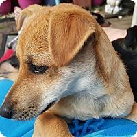 Adopt A Pet :: Aaron - Andalusia, PA