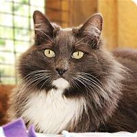 Adopt A Pet :: Gidget - Lincoln, CA