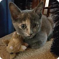 Adopt A Pet :: Julie - Woodstock, ON