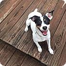 Adopt A Pet :: Bonnie (& Baby Girl)