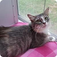 Adopt A Pet :: Sun City Mama Kitty - Waxhaw, NC