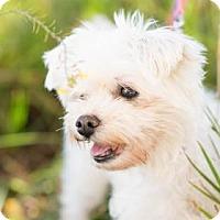 Adopt A Pet :: Maggie B - Santa Fe, TX