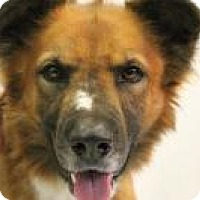 Adopt A Pet :: Duke - Huachuca City, AZ