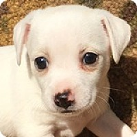 Adopt A Pet :: Anna Appleseed - Houston, TX