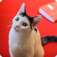 Adopt A Pet :: Mellon - New York, NY