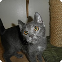 Adopt A Pet :: Marina - Milwaukee, WI