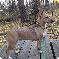 Adopt A Pet :: Scout **in a foster home** - Breinigsville, PA