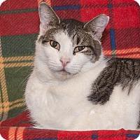 Adopt A Pet :: Franklin - Elmwood Park, NJ