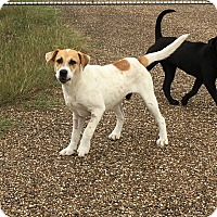 Adopt A Pet :: Christine's dog - Beeville, TX
