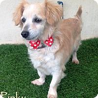 Adopt A Pet :: Pinky - San Diego, CA