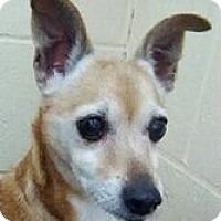 Adopt A Pet :: Mildred - Springdale, AR