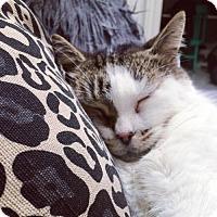 Adopt A Pet :: Arthur - Toronto, ON