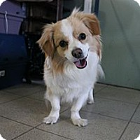 Adopt A Pet :: Charlie - Grand Rapids, MI