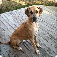 Adopt A Pet :: Shaggy - Virginia Beach, VA