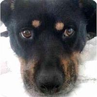 Adopt A Pet :: Stella - Los Angeles, CA