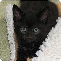 Adopt A Pet :: Charlie - Richfield, OH