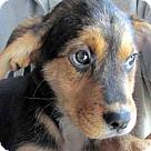 Adopt A Pet :: Coors