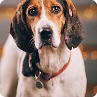 Adopt A Pet :: Samantha Rose - Portland, OR
