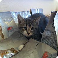Adopt A Pet :: Patterson - Toronto, ON