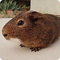 Adopt A Pet :: Edmund - Fullerton, CA