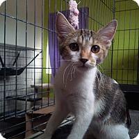 Adopt A Pet :: Wendy - Scottsdale, AZ