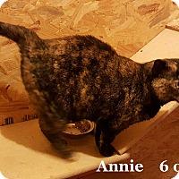 Adopt A Pet :: Annie - Bentonville, AR