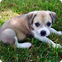 Adopt A Pet :: Vallonia - Thompson's Station, TN