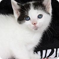 Adopt A Pet :: Vienna - St Louis, MO