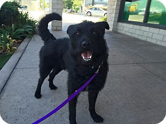 Terrier (Unknown Type, Medium) Mix Dog for adoption in Los Angeles, California - GRIFF