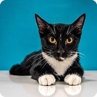 Adopt A Pet :: Bojangles - Chandler, AZ