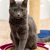 Adopt A Pet :: Addison - Baltimore, MD